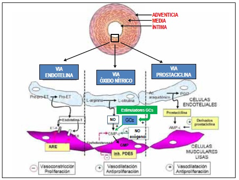 9 Métodos sensibles para hacer uso de Presión arterial normal